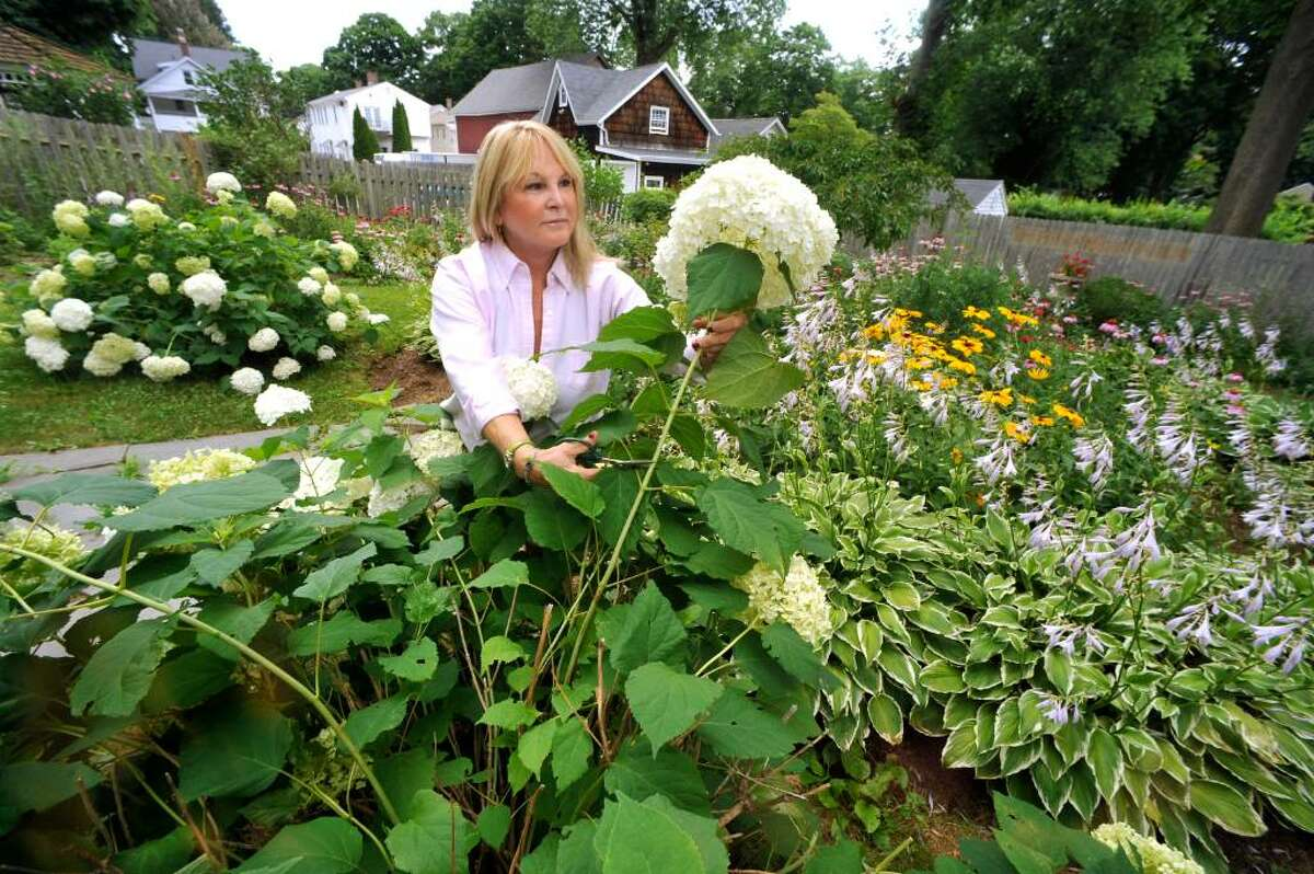 Barbara DeLong prunes an anabell hydrea in the queens garden behind her Bethel home on Friday, July 9, 2010.