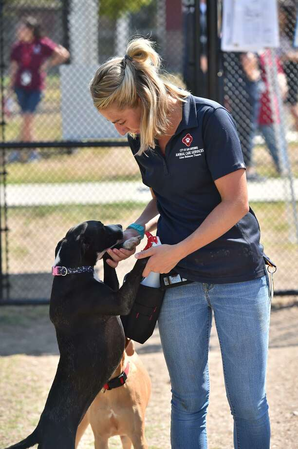 """ACS dog trainer Lauren Hickle played with one of the shelter's dogs at the facility's """"Big Yard"""" earlier this year. This dog will not be available for adoption at ACS. Photo: Robin Jerstad /San Antonio Express News / ROBERT JERSTAD"""