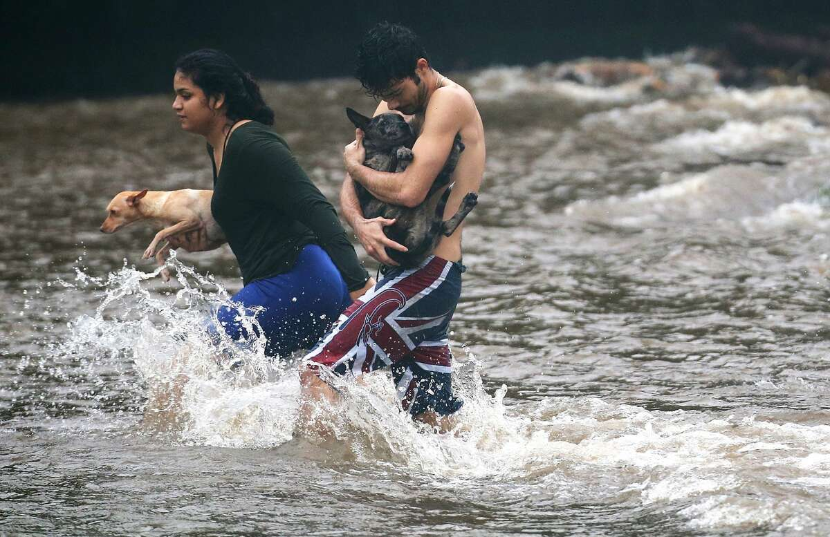 Residents carry dogs through flood waters to dry land, after playing in the water briefly on the Big Island on August 23, 2018 in Hilo, Hawaii. Hurricane Lane has brought more than a foot of rainfall to some parts of the Big Island which is under a flash flood warning.