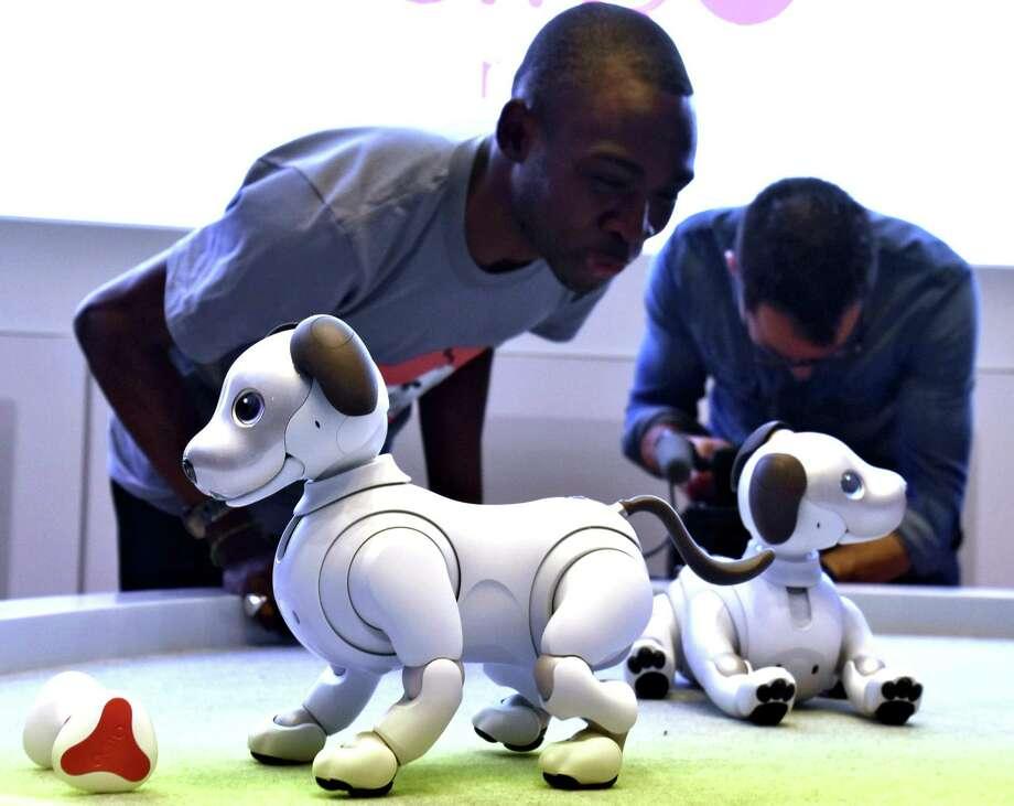 Robotic puppy aibo. Photo: Japan News-Yomiuri / Japan News-Yomiuri
