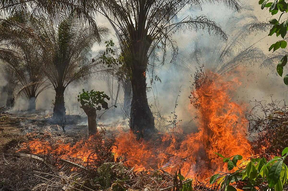 This picture shows a fire at an oil palm plantation in Pekanbaru, Riau province, Sumatra on August 14, 2018. - Fires, due to