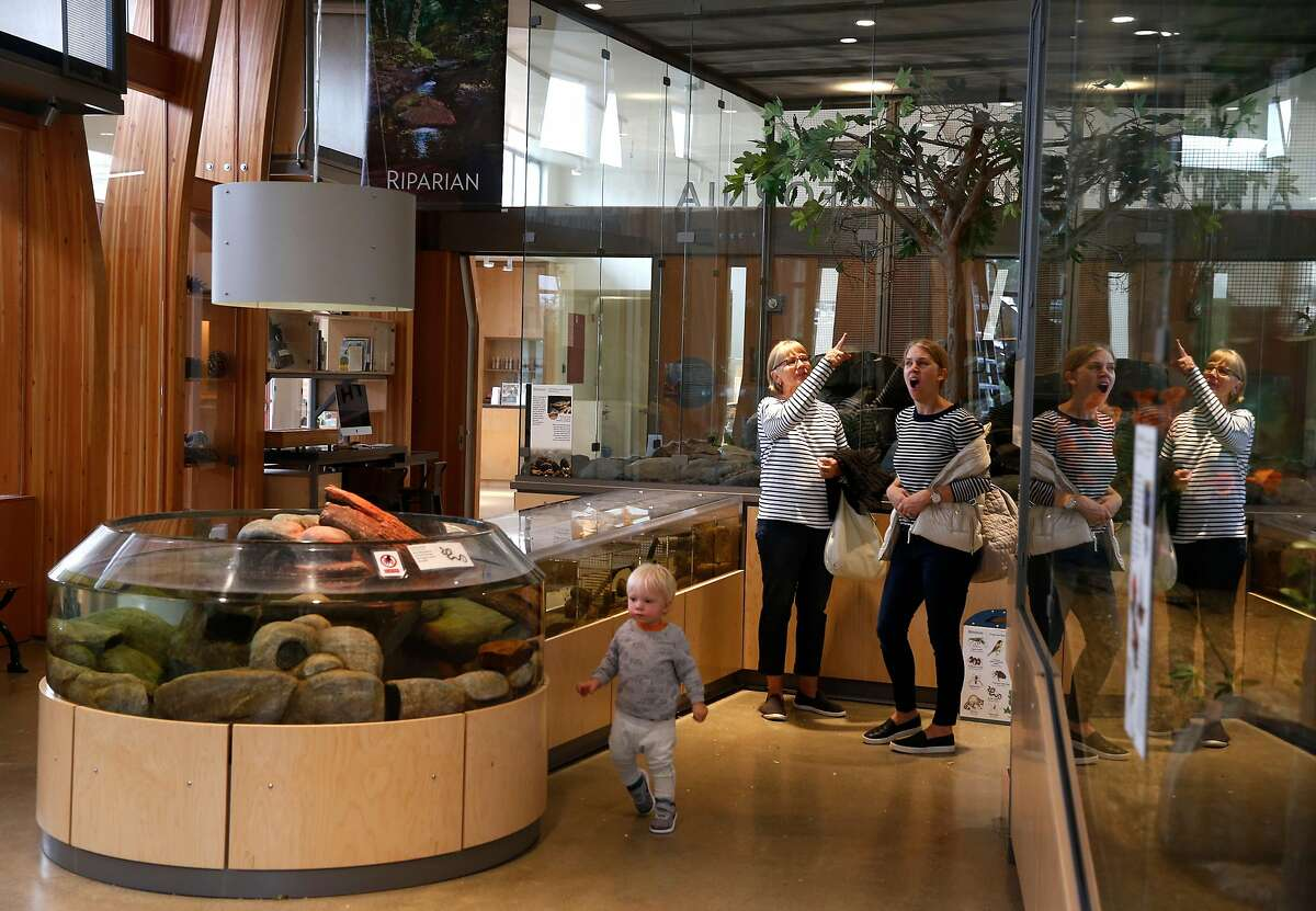 Visitors view the animals in the Wild in California exhibit at the newly redesigned Randall Museum in San Francisco, Calif. on Friday, Aug. 24, 2018.