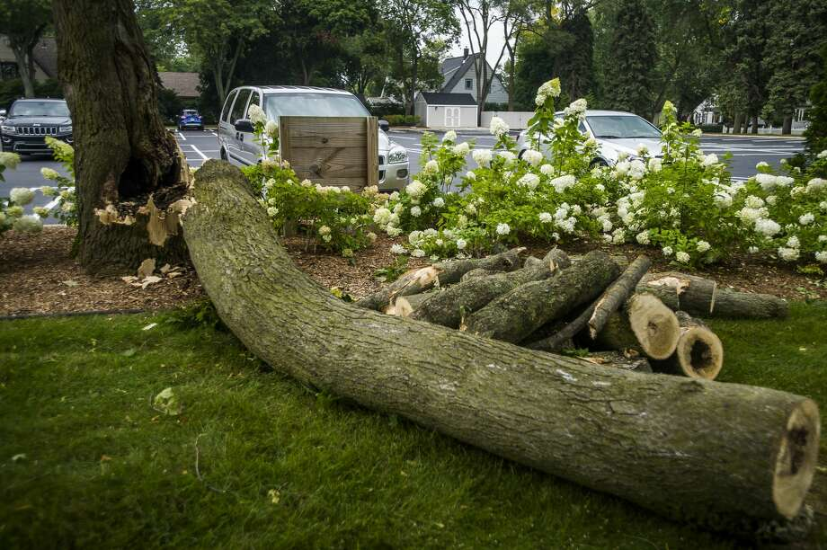 A tree that was damaged during a thunderstorm in the early morning hours of Monday, Aug. 27, 2018 near Central Park Elementary in Midland. (Katy Kildee/kkildee@mdn.net) Photo: (Katy Kildee/kkildee@mdn.net)