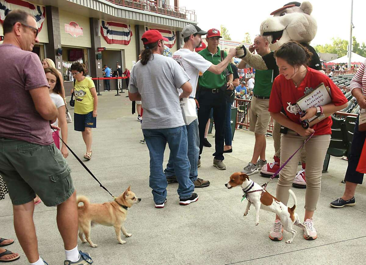 People are accompanied by their dogs as they come to watch the Tri-City ValleyCats take on the Aberdeen IronBirds during the annual Bark in the Park night on Monday, Aug. 27, 2018 in Troy, N.Y. (Lori Van Buren/Times Union)