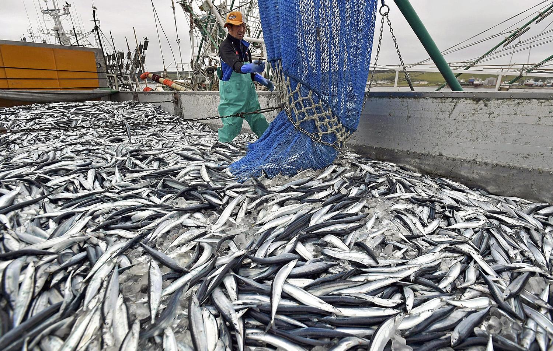 Ловля рыбы в японии