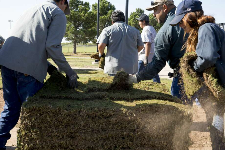 City of Odessa Parks and Recreation workers lay new turf in UTPB Park on Wednesday. 8/22/2018  Jacy Lewis/191 News Photo: Jacy Lewis/191 News