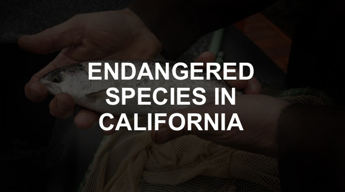 Click through the slideshow to see the endangered species in California.