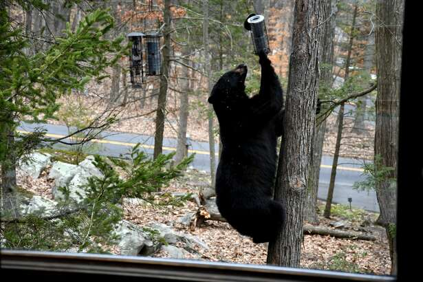 In April, another bear was spotted snacking on the bird feeders outside the home of Brookfield resident Tina Heidrich.