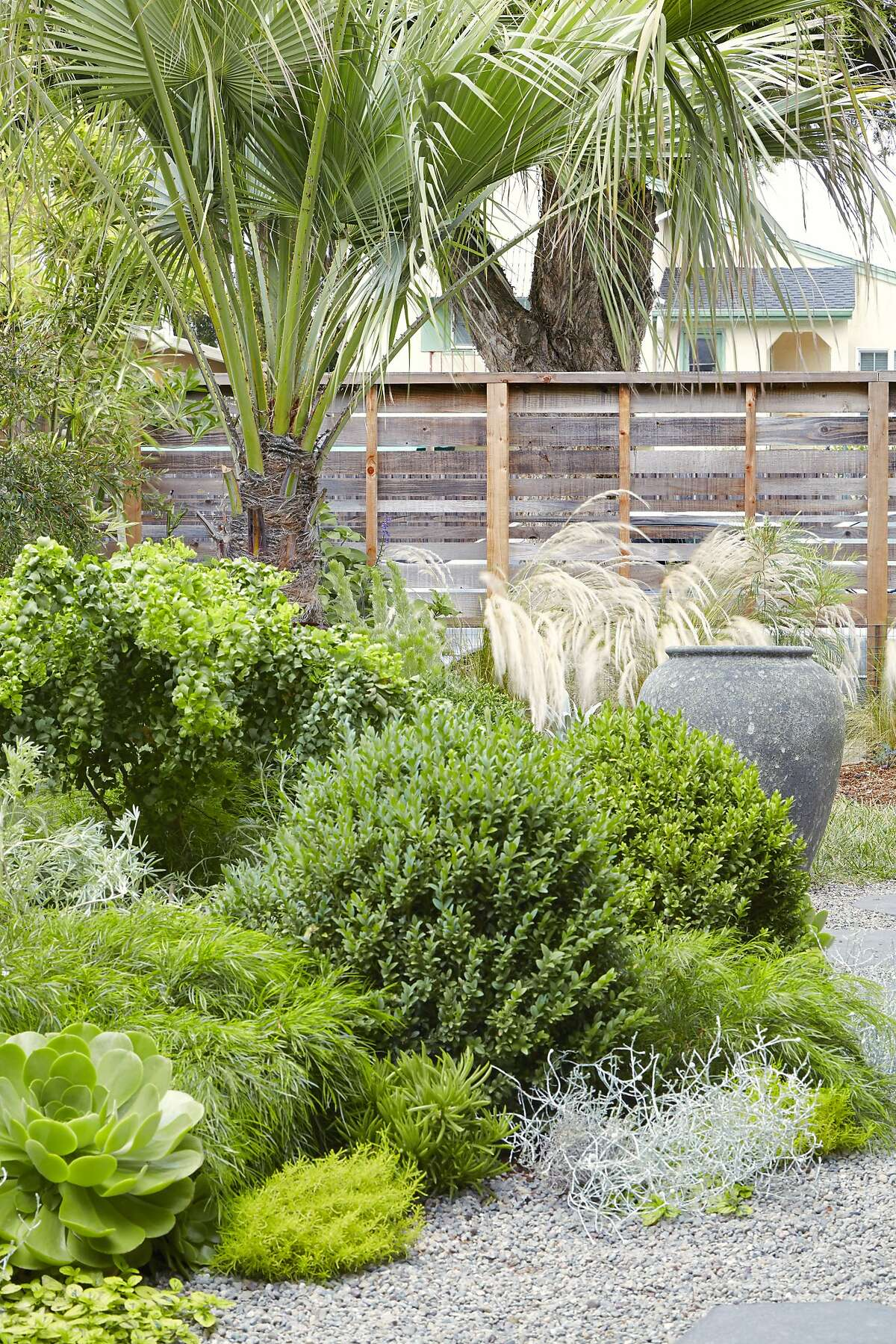 Some palms are nearly silent in wind, but the Clara palm (Brahea clara), here in Flora Grubb�s Berkeley garden, is one of those that produces a soothing rustle as the wind blows through.
