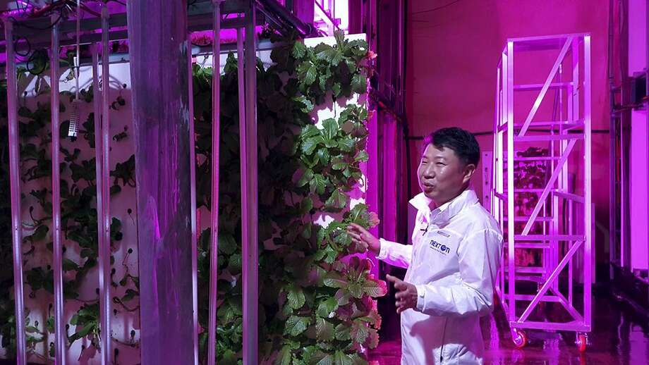 Choi Jae Bin, head of NextOn, describes the firm's cultivation system last month at the facility in the city of Okcheon. The high-tech farm occupies a shuttered former highway tunnel. Photo: Han Myung Oh / Associated Press
