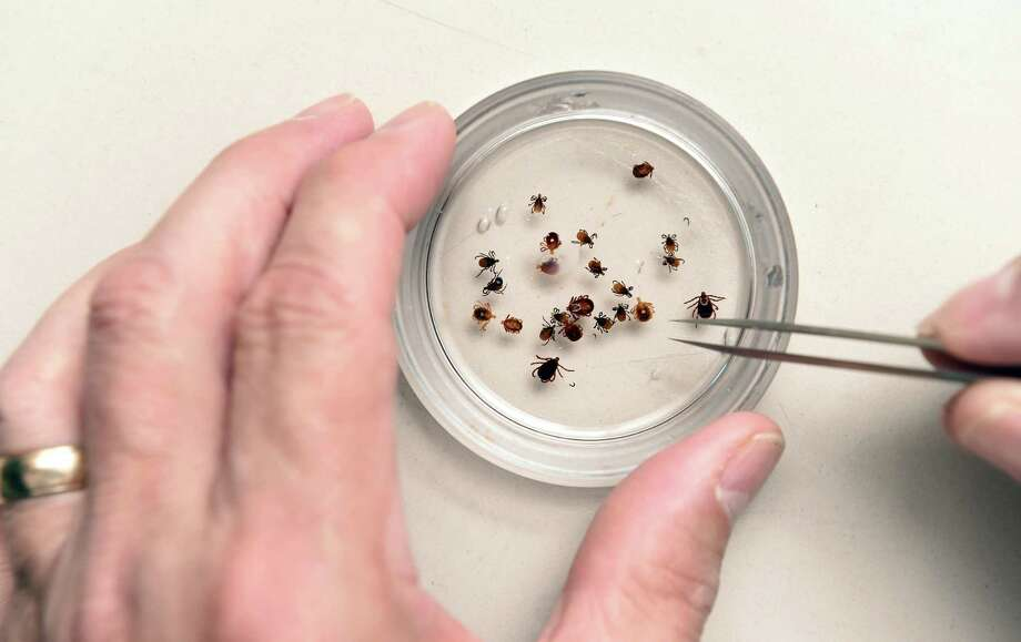 Kirby Stafford, III, chief scientist and state entomologist for the Connecticut Agricultural Experiment Station, holds a sampling of ticks, including deer ticks, Lone Star ticks and American Dog ticks, in the Jenkins Wagner Laboratory Building at the Connecticut Agricultural Experiment Station in New Haven on August 28, 2018. Photo: Arnold Gold / Hearst Connecticut Media / New Haven Register