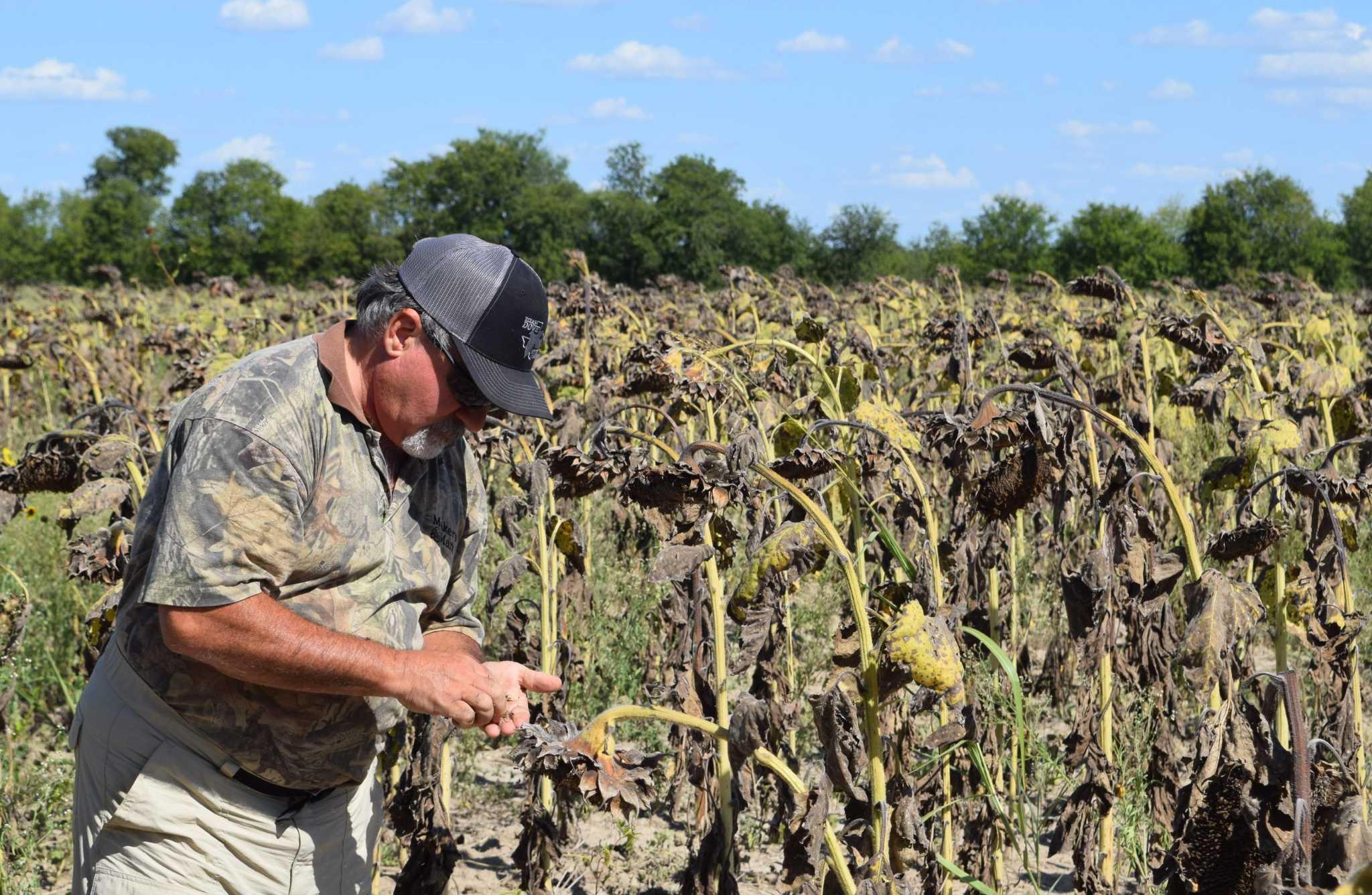 Dove Time Texas Hunters Prepare For Statewide Opening Day