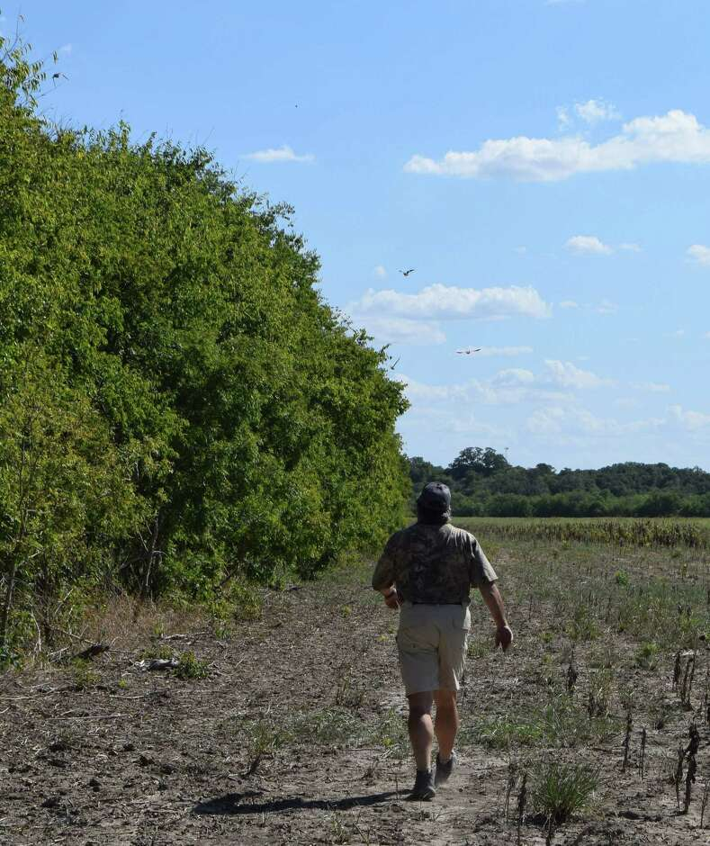 Dove Time: Texas Hunters Prepare For Statewide Opening Day ...