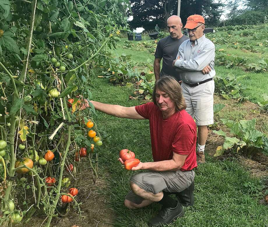 Eric Olsen looks over some tomatoes as Eric and Ralph Gorman study the plants at White Silo Farm and Winery on Thursday, Aug. 30, 2018, in Sherman, Conn. Photo: Chris Bosak / Hearst Connecticut Media / The News-Times