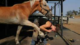 Sam Gubera works on cleaning up Bosco's hooves at The Horse Park at Woodside in Woodside, Calif., on Friday, August 24, 2018. Sam Gubera has been working as a farrier, a profession largely dominated by men, for three years after having ridden horses since she was 6 years old.