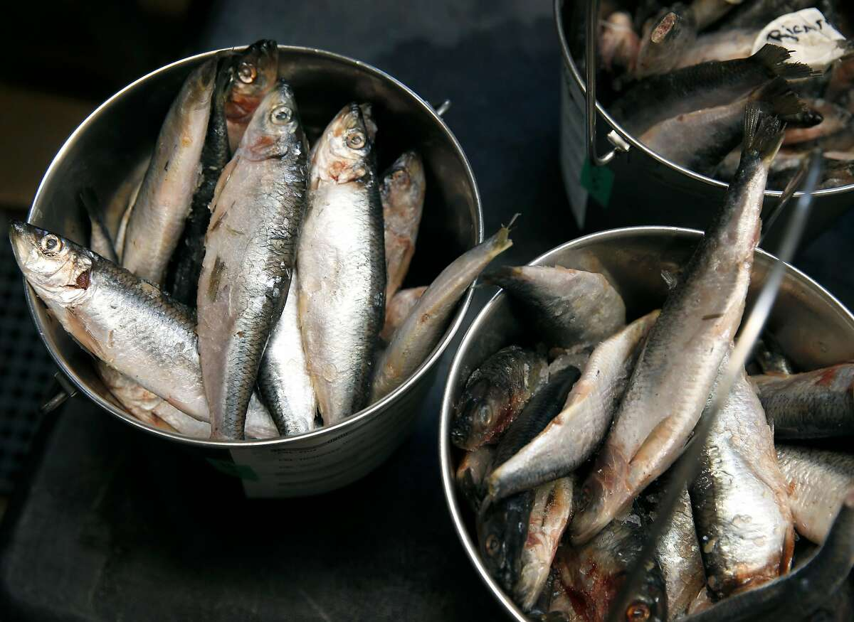 Buckets of frozen herring are prepared to feed to sea lions and harbor seals at the Marine Mammal Center in Sausalito, Calif. on Friday, Aug. 24, 2018. Many social media users are encouraging their followers to donate to organizations when their birthday notifications appear and money donated to the MMC funds the fish to feed to the marine mammal patients.
