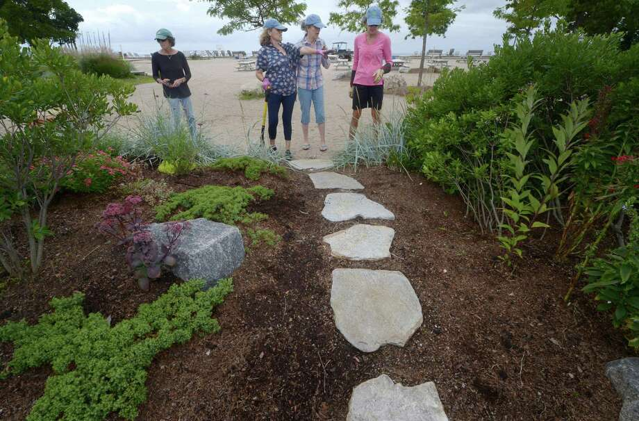 The Rowayton Gardeners including Frani Taylor, Phyllis Padro, Pamela Proctor and project co-chair Ellen Duggins work on the xeriscape garden Friday, August 31, 2018, on the established berms which form a pollinator-friendly barrier between the parking lot and the sand at Bayley Beach in Norwalk, Conn. The group is applying for $1,000 grant to help pay for a xeriscape garden at the beach. Photo: Erik Trautmann / Hearst Connecticut Media / Norwalk Hour