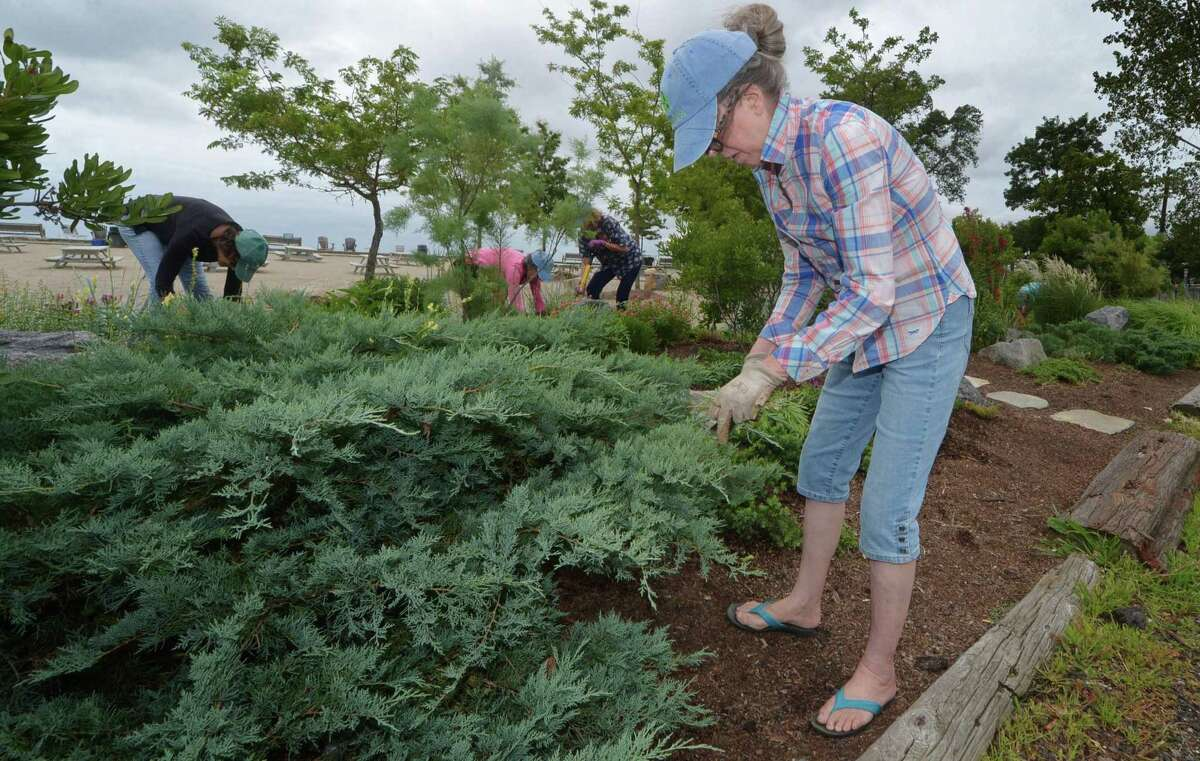 The Rowayton Gardeners including Pamela Proctor work on the xeriscape garden Friday, August 31, 2018, on the established berms which form a pollinator-friendly barrier between the parking lot and the sand at Bayley Beach in Norwalk, Conn. The group is applying for $1,000 grant to help pay for a xeriscape garden at the beach.