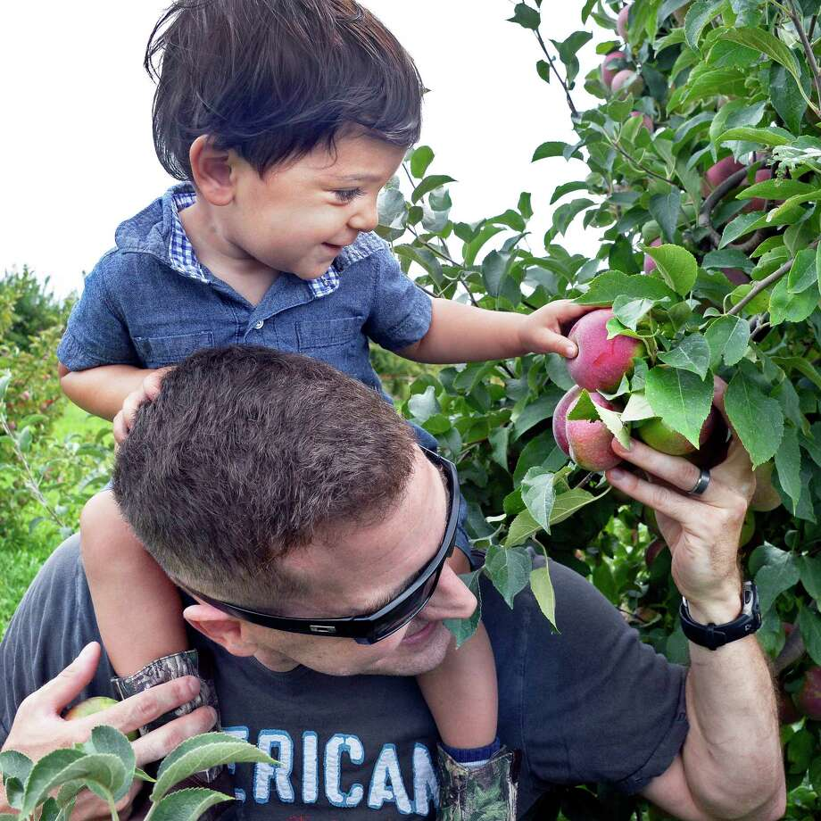 Josh Spath of Watervliet helps son Liam, 17-months-old, to reach a ripe apple as pick your own apple season begins at Indian Ladder Farms Saturday Sept. 1, 2018 in Altamont, NY.  (John Carl D'Annibale/Times Union) Photo: John Carl D'Annibale / 20044662A