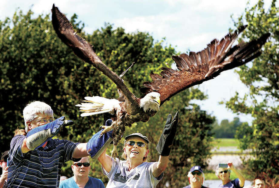 Dr. Paul Myer, left, and TreeHouse Wildlife Center executive director Adele Moore, right, release a mature bald eagle into the wild Monday afternoon in West Alton, Missouri. The eagle had been injured and operated on by Dr. Myer.