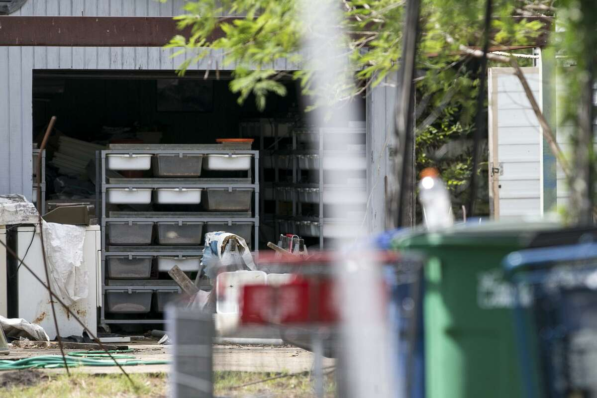 Bins of feeder mice and rats in the shed of a home San Antonio's Southside, Wednesday, Sept. 5, 2018. Numerous snakes, including two 12-15 foot long pythons were discovered at the home.