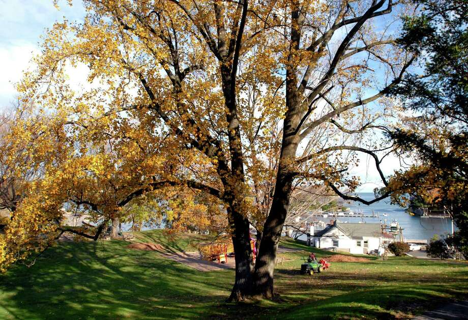 The Greenwich Tree Conservancy will host a Tree Walk with Town Tree Warden Bruce Spaman from 2 to 4 p.m. Sunday. Learn about the trees and enjoy the beautiful seaside setting of this town gem as you take an informative walk in the park. Byram Park was once the site of a stone quarry and an estate known as the Anchorage. Walking will be moderate with an optional hill climb. All ages are welcome, and comfortable shoes are recommended. Reserve a spot by emailing treeconserv@optonline.net. Photo: File / Greenwich Time