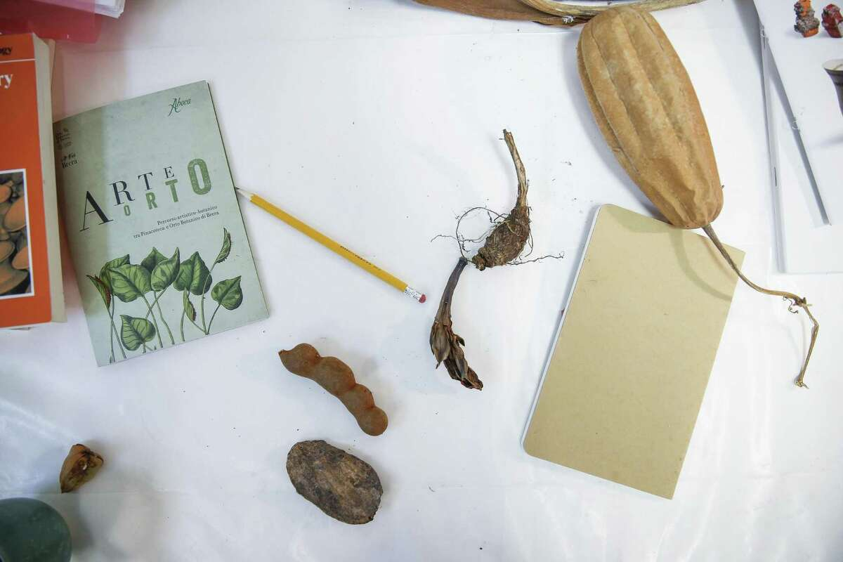 Seed pods and other natural items sit on sculptor Tracye Wear's desk for inspiration in her Heights studio.