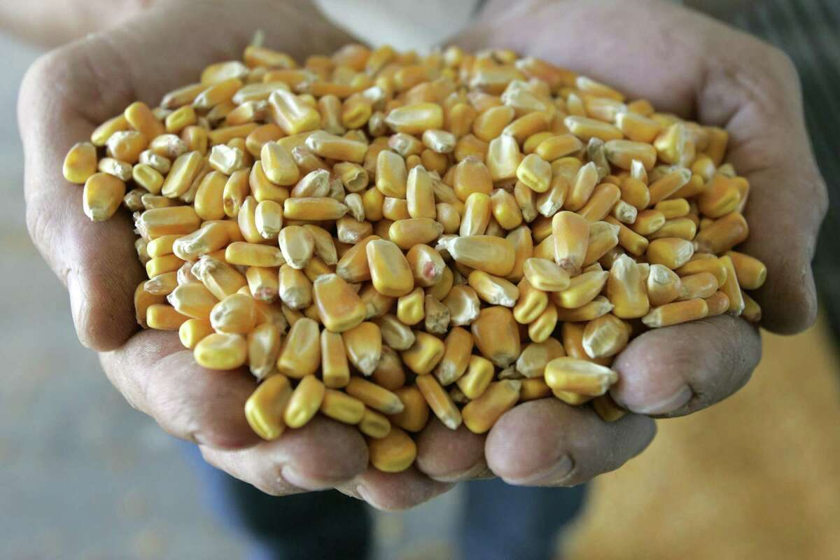 A handful of corn is shown before it is processed at the Tall Corn Ethanol plant in Coon Rapids, Iowa in 2006. The Renewable Fuels Standard must go.