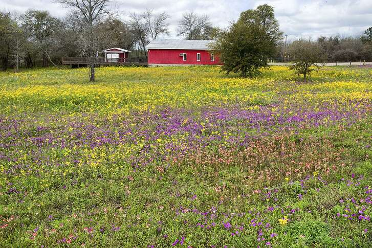 Wildflowers bloom in the spring, but the best time to plant them is right now with seed. Plant the seed in full sun on a site that does not have sod or a heavy cover of weeds.