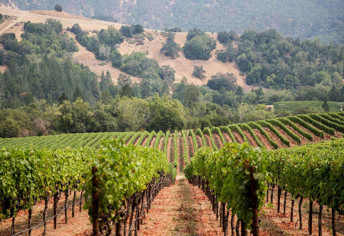 Rows of grapevines are seen in the main vineyard of Hess Collection Winery in Napa, Calif. Tuesday, Aug. 21, 2018.