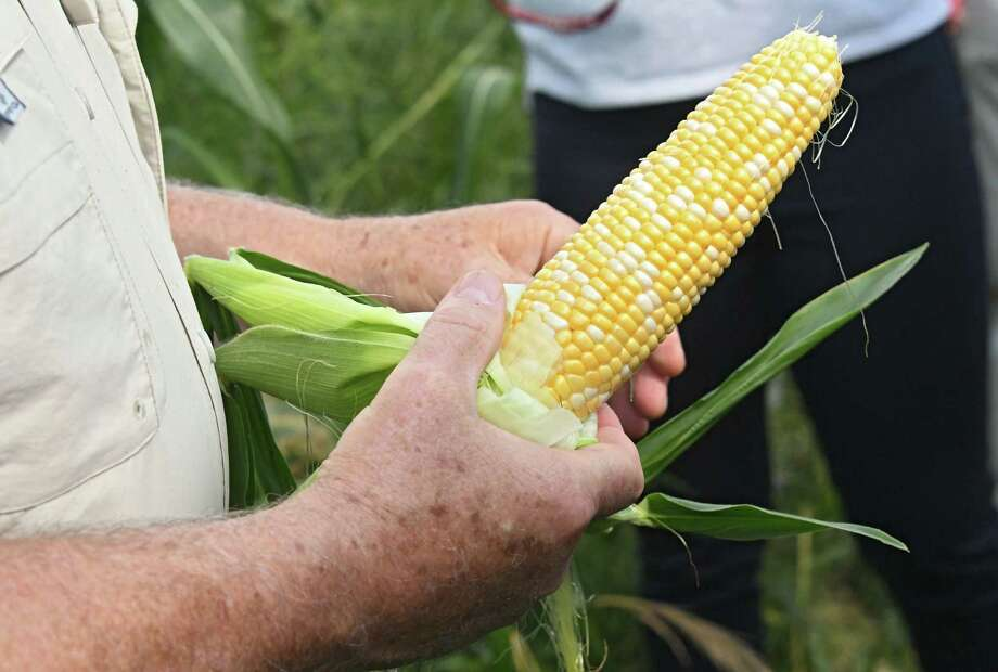 U.S. Secretary of Agriculture Sonny Perdue checks out a the corn as he takes a tour of the Altobelli Family Farm on Thursday, Aug. 23, 2018 in Valatie, N.Y. (Lori Van Buren/Times Union) Photo: Lori Van Buren / 20044633A