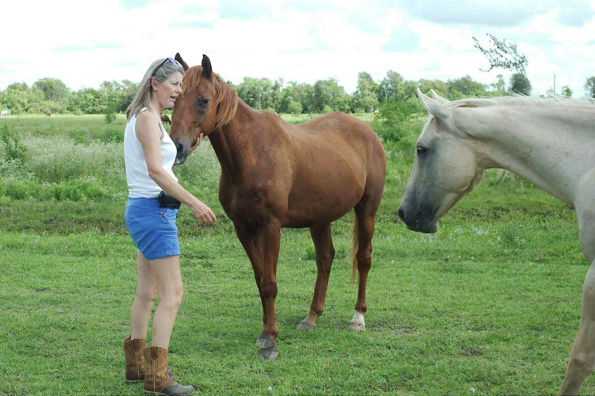 Habitat for Horses Executive Director Rebecca Williams interacts with a rescued horse brought to the group's Alvin facility.