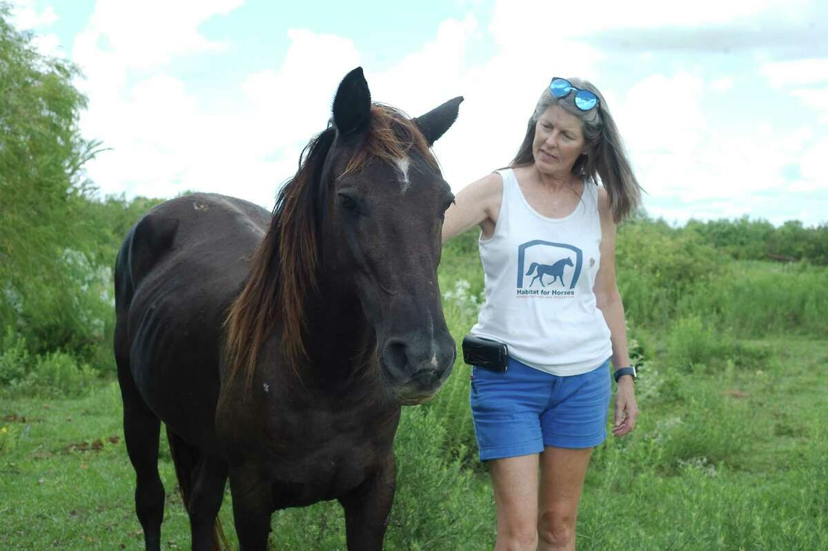 """Habitat for Horses Executive Director Rebecca Williams interacts with a rescued horse. """"Our commitment to the horse is they'll never end up in the position in which we found them,"""" said Williams, who is preparing for a concert fundraiser in Brenham to ehlp the group buy hay. """"We want them to have a good second life."""""""