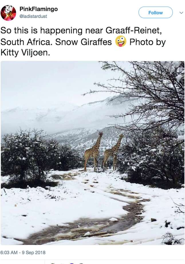 Snow fell in mountainous and high-desert areas of South Africa in the first week of September 2018. While snow isn't unusual in the mountains, it's extremely uncommon in spring, which starts on Sept. 1 in South Africa. Photo: Twitter Screen Grab