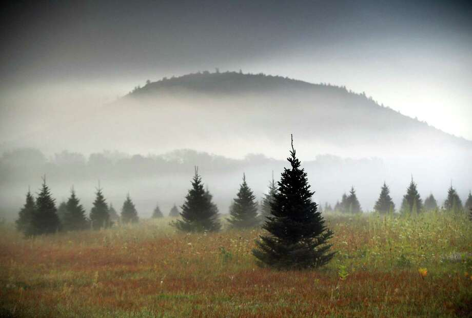 In this Sept. 27, 2017, file photo fog drifts through a Christmas tree farm near Starks Mountain in Fryeburg, Maine. Amazon plans to sell and ship fresh, full-size Christmas trees this year. They'll go on sale in November and be sent within 10 days of being cut. Amazon says they should survive the shipping fine. Photo: Robert F. Bukaty /Associated Press / Copyright 2017 The Associated Press. All rights reserved.
