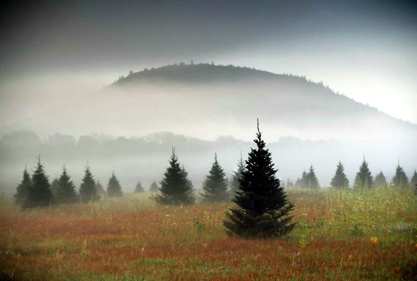 FILE- In this Sept. 27, 2017, file photo fog drifts through a Christmas tree farm near Starks Mountain in Fryeburg, Maine. Amazon plans to sell and ship fresh, full-size Christmas trees this year. They?'ll go on sale in November and be sent within 10 days of being cut. Amazon says they should survive the shipping fine. (AP Photo/Robert F. Bukaty, File)