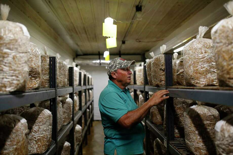 Steve Carroll of the Carolina Mushroom Farm says his business has withstood every major hurricane and storm since the early 1980s. Photo: Photo By Eamon Queeney For The Washington Post / For The Washington Post