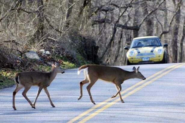 Last year, 687 deer were killed in collisions with motor vehicles.But the actual number of deer roadkill is likely, much higher. Based on a two-year study, for every deer killed by a vehicle and reported to the Wildlife Division, five additional deer were killed by vehicles and not reported. Based on this correlation, it's estimated that the actual number of road kills in 2017 was 4,122.