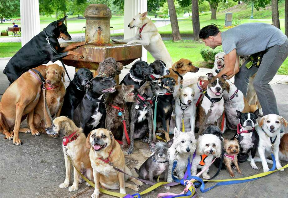 Tim Pink of Saratoga Dog Walkers poses 29 of his charges for a group photo at Congress Spring in Congress Park Wednesday Sept. 12, 2018 in Saratoga Springs, NY.  (John Carl D'Annibale/Times Union) Photo: John Carl D'Annibale, Albany Times Union