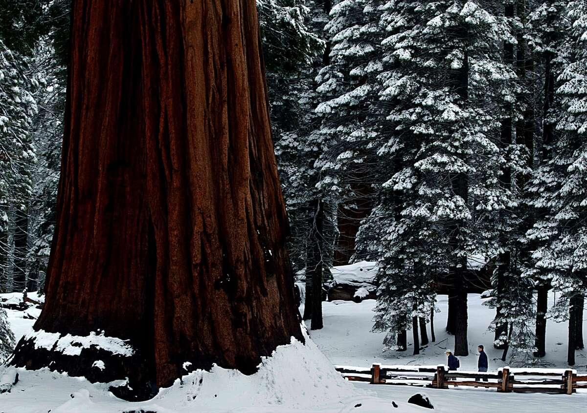 A pair of hikers trod through a blanket of fresh snow along Big Trees Trail in Sequoia National Park.