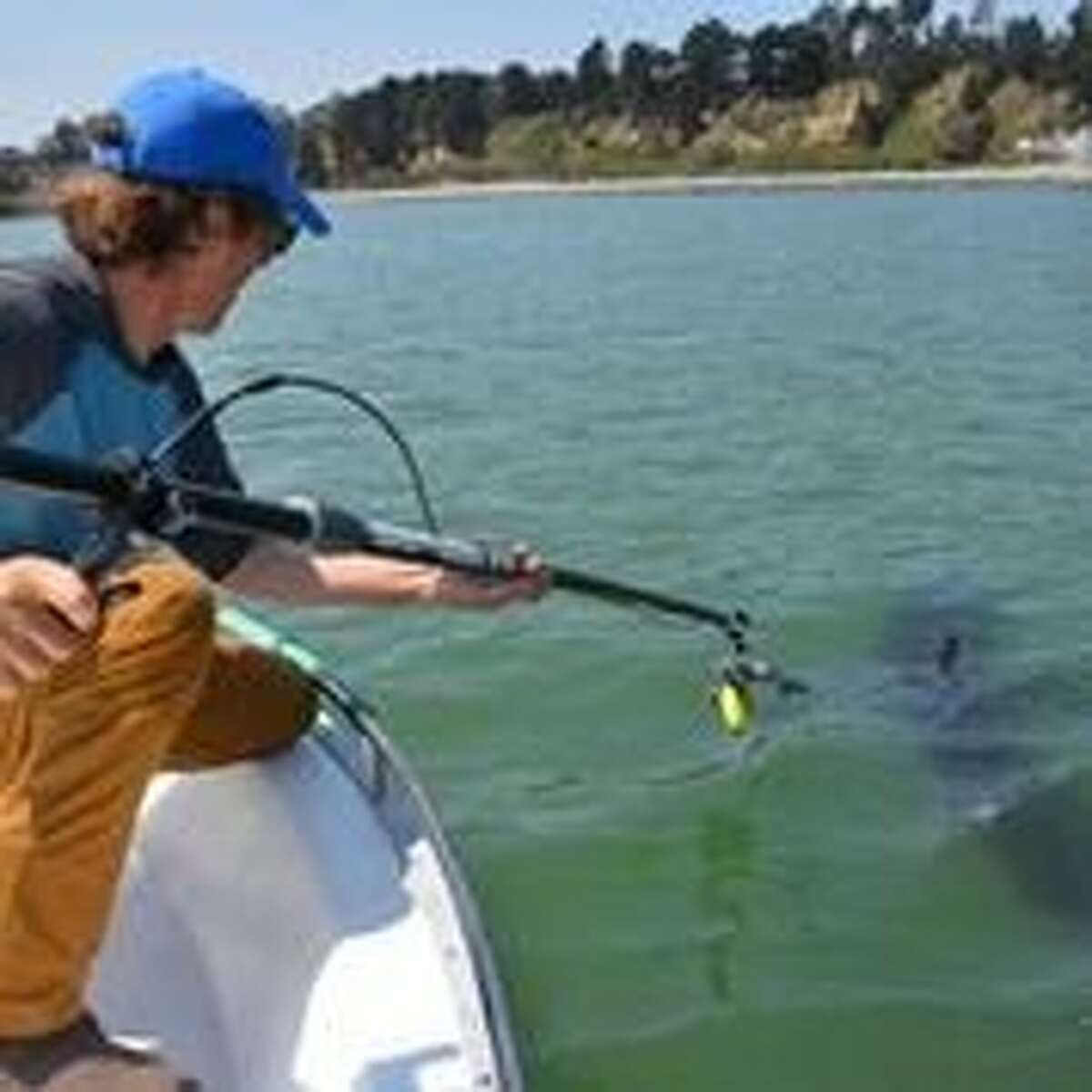 Salvador Jorgensen, a research scientist with the Monterey Bay Aquarium, tags a shark off the coast of California.