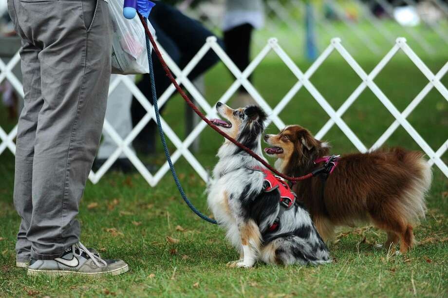 Adopt-A-Dog will host its annual Puttin' On The Dog event on Sunday at Roger Sherman Baldwin Park from 10 a.m. to 4:30 p.m. There will be dog demonstrations, food trucks, vendors, competitions to enter your dog in, adoptable dogs, a silent auction and much more. Tickets can be purchased online at adoptadog.org or at the event that day. Tickets are $18 for adults, $8 for seniors and $30 for the family package. Ticket prices will be higher at the gate. Photo: File / Michael Cummo / Hearst Connecticut Media / Stamford Advocate