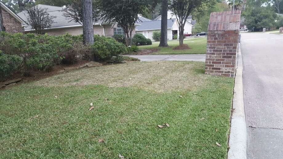 Large Patch presence in St. Augustine lawn