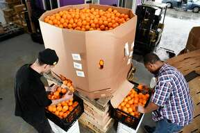 Operation assistants Dallin Kapp, left, and Jonel Jimmerson sort through oranges that are bought as waste from a grower and are then divided up according to their saleability at Imperfect Produce's warehouse in Emeryville, CA, Wednesday March 9, 2016.