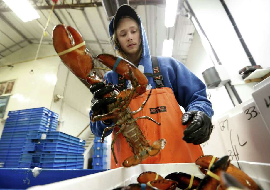 In this Tuesday, Sept. 11, 2018 photo, Kyle Bruns packs a live lobster for shipment to Hong Kong at The Lobster Company in Arundel, Maine. China is a major buyer of lobsters, and the country imposed a heavy tariff on exports from the U.S. in early July amid trade hostilities between the two superpowers. Exporters in the U.S. say their business in China has dried up since then. Photo: Robert F. Bukaty /Associated Press / Copyright 2018 The Associated Press. All rights reserved.