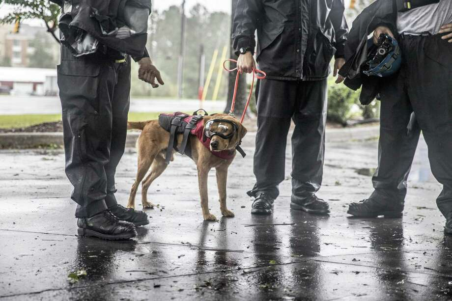 Rescue workers stand with a search dog - outfitted with protective goggles and a life vest - Saturday in Wilmington, North Carolina. MUST CREDIT: Bloomberg photo by Alex Wroblewski Photo: Alex Wroblewski /Bloomberg / Bloomberg