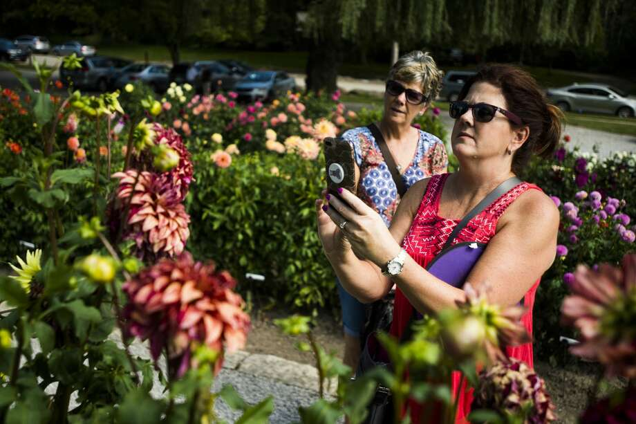 Nora Vusich of West Bloomfield, right, takes a photo of a dahlia alongside Patty Davis of Ypsilanti, left, during Dahlia Hill's annual Autumn Equinox event, which included a tribute to Charles and Ester Breed, on Sunday, Sept. 16, 2018 at the garden. (Katy Kildee/kkildee@mdn.net) Photo: (Katy Kildee/kkildee@mdn.net)