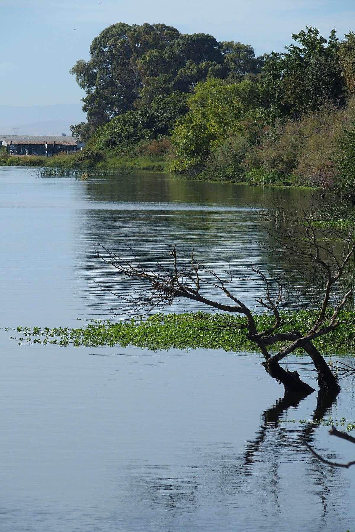 Scenery around Brannan Island State Recreation Area near Rio Vista.