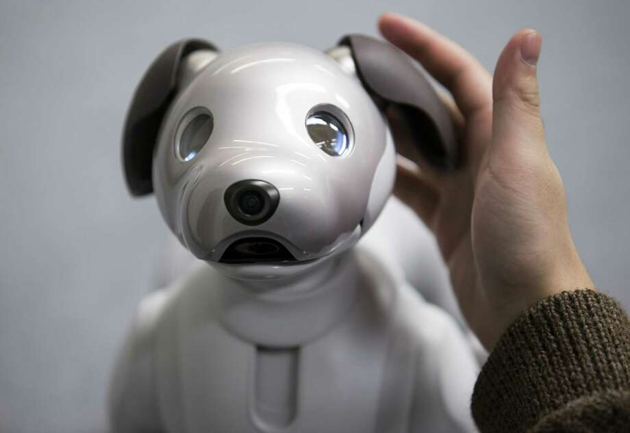 Sony's robotic dog Aibo is about the size of a Yorkshire terrier and costs $2,900. It will go on sale in the U.S. this week. Photo: Bloomberg Photo By Tomohiro Ohsumi / Bloomberg