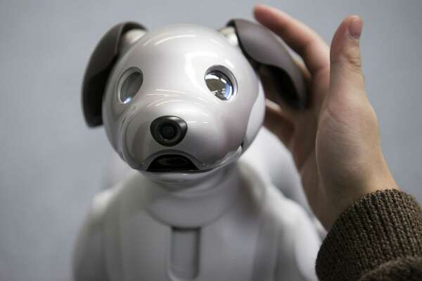 Sony's robotic dog Aibo is about the size of a Yorkshire terrier and costs $2,900. It will go on sale in the U.S. this week.